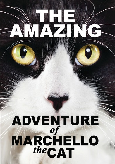 The Amazying Adventure of Marchello The Cat
