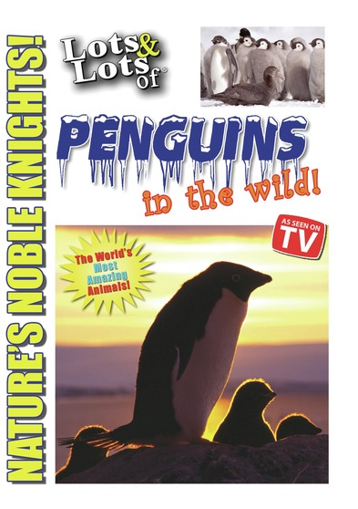 Lots & Lots of Penguin in the Wild - Nature's Noble Knights